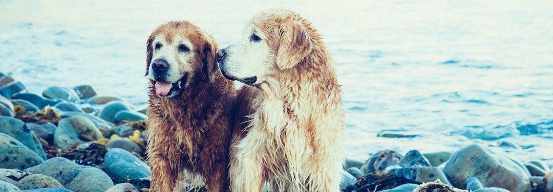 7 Tipps für eine lange Beziehung